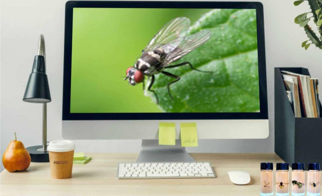 FSP 502 : Forensic Entomology