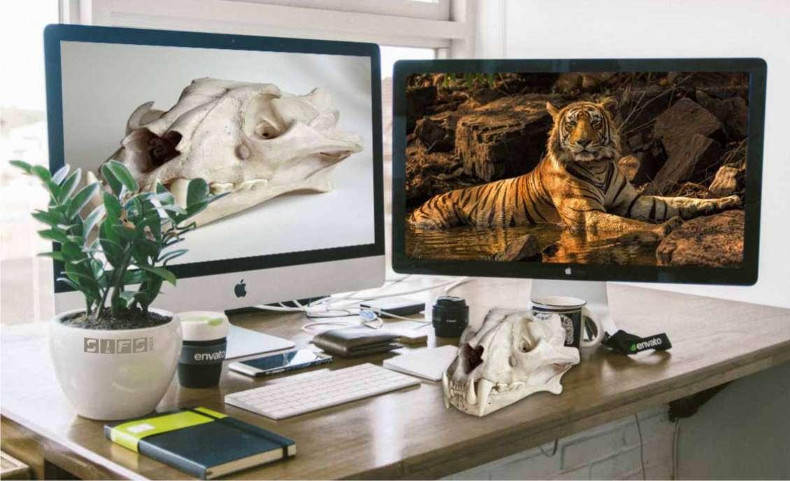 FSP 503 : Wildlife Forensics